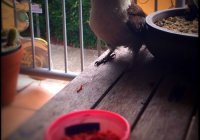 Breakfast With Mr Kookaburra